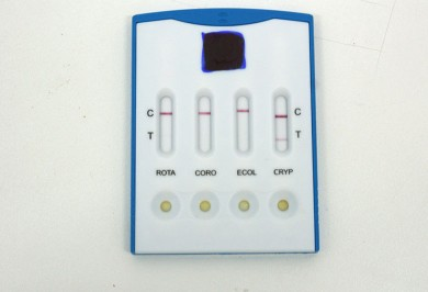Inmunocromatografia Bovino